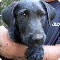 Adopt A Pet :: Yeddi - Harrisburg, PA