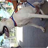 Adopt A Pet :: Bear - Winter Haven, FL