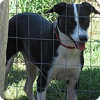 Adopt A Pet :: Bobbi - Natchitoches, LA