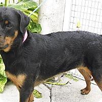 Adopt A Pet :: Nelly - Pembroke Pines, FL