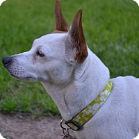 Adopt A Pet :: Opal~ADOPTED - Troy, OH
