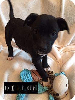 Labrador Retriever/Boxer Mix Puppy for adoption in Atlanta, Georgia - Dillon