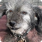 Adopt A Pet :: Jazzie