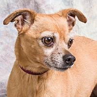 Adopt A Pet :: CHICO - Anna, IL