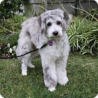 Adopt A Pet :: MARGOT - Newport Beach, CA