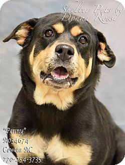 Rottweiler Mix Dog for adoption in Newnan City, Georgia - Penny