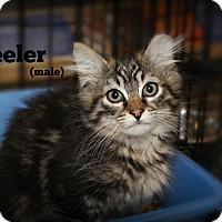 Adopt A Pet :: Wheeler - Springfield, PA