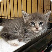 Adopt A Pet :: Mandy - Perth Amboy, NJ
