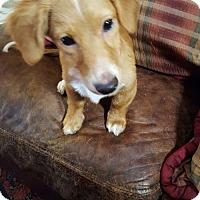 Adopt A Pet :: Noah - Humble, TX