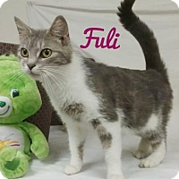 Adopt A Pet :: Fuli - Kendallville, IN