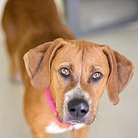 Adopt A Pet :: Charlotte - St. Petersburg, FL
