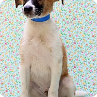Adopt A Pet :: Willie Nelson - Waldorf, MD