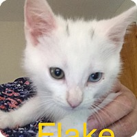 Adopt A Pet :: Flake - Covington, KY