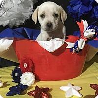 Adopt A Pet :: Gazelle - New Port Richey, FL