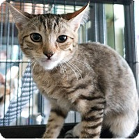 Adopt A Pet :: Nylah - Redwood City, CA