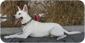 German Shepherd Dog/Labrador Retriever Mix Dog for adoption in Los Angeles, California - Beth von Lancaster