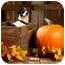 Photo 1 - Rat Terrier/Beagle Mix Dog for adoption in Portland, Oregon - Cowboy