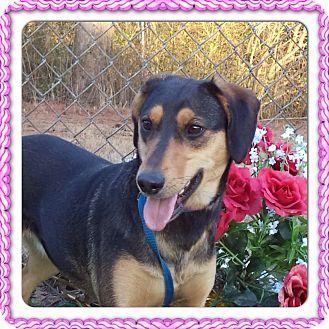 Beagle/Doberman Pinscher Mix Dog for adoption in Marietta, Georgia - KAMILLE (R)