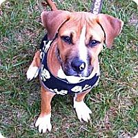 Adopt A Pet :: G-Baby - Vernon Hills, IL