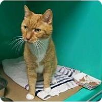 Adopt A Pet :: Paddy - Secaucus, NJ