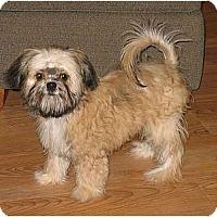 Adopt A Pet :: Brady - ADOPTION PENDING - Clinton, CT