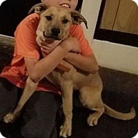 Adopt A Pet :: Vaesta - Sedan, KS