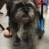 Adopt A Pet :: Oliver - Studio City, CA
