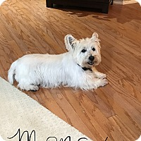Adopt A Pet :: MONA HAS BEEN ADOPTED! - Frisco, TX