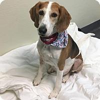 Hound (Unknown Type) Mix Dog for adoption in Richmond, Virginia - Enid