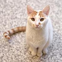 Adopt A Pet :: Reshiram - Chattanooga, TN