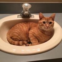 Adopt A Pet :: Alex - Richmond, VA