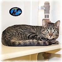 Adopt A Pet :: Pita - Howell, MI