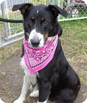Border Collie Mix Dog for adoption in Lapeer, Michigan - Jade