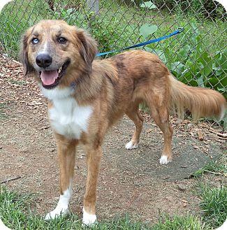 Saluki Mix Dog for adoption in Marietta, Georgia - GRIFFIN (R)