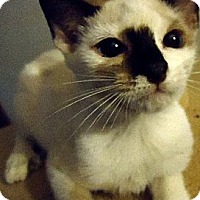 Adopt A Pet :: Laina - Jacksonville, FL