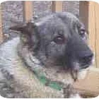 Adopt A Pet :: Sassy - Belleville, MI