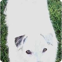 Adopt A Pet :: ANGEL - Phoenix, AZ