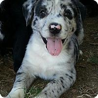 Adopt A Pet :: Possum - Greenville, RI