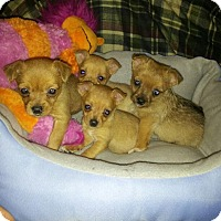 Adopt A Pet :: Tinker - Denver, IN