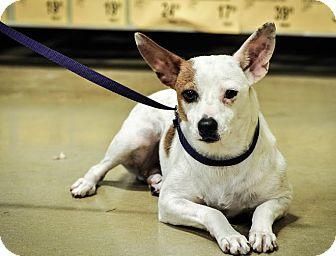 Terrier (Unknown Type, Small) Mix Dog for adoption in Gainesville, Florida - Jessie