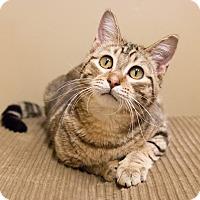 Adopt A Pet :: Ponti - Chicago, IL