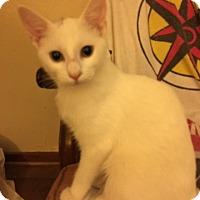 Adopt A Pet :: Winnie - Delmont, PA