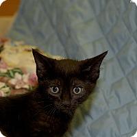 Adopt A Pet :: Zion - Medina, OH