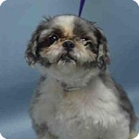 Adopt A Pet :: TLC - Brooklyn, NY