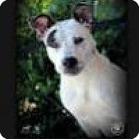 Adopt A Pet :: Hannon - Sullivan, IN