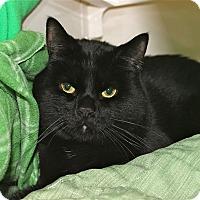Adopt A Pet :: Puma - Duluth, MN