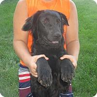 Adopt A Pet :: Charlie - Iowa, Illinois and Wisconsin, IA