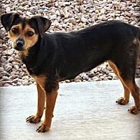Adopt A Pet :: Stella - Tijeras, NM