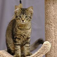 Adopt A Pet :: Kissie C1809 - Shakopee, MN