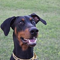 Adopt A Pet :: Callen - Phoenix, AZ